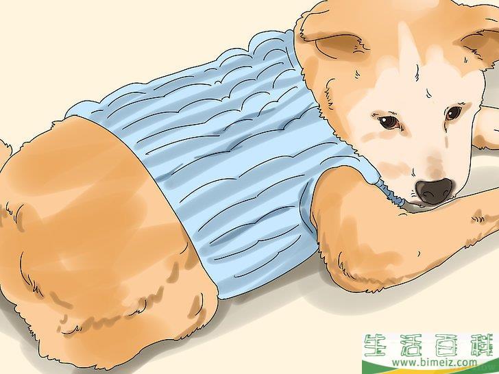 如何使用椰子油给狗狗驱除跳蚤以及护理皮肤