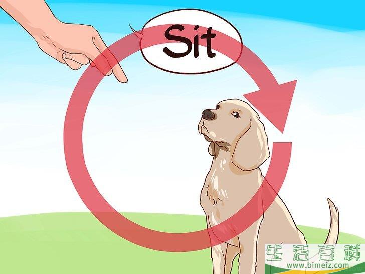 如何爱自己的狗狗