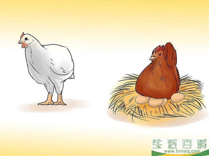 如何开始养鸡事业