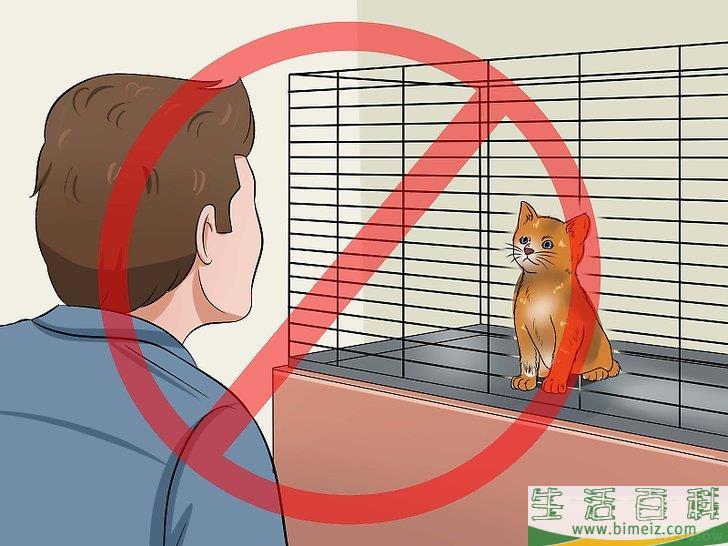 如何训练幼猫