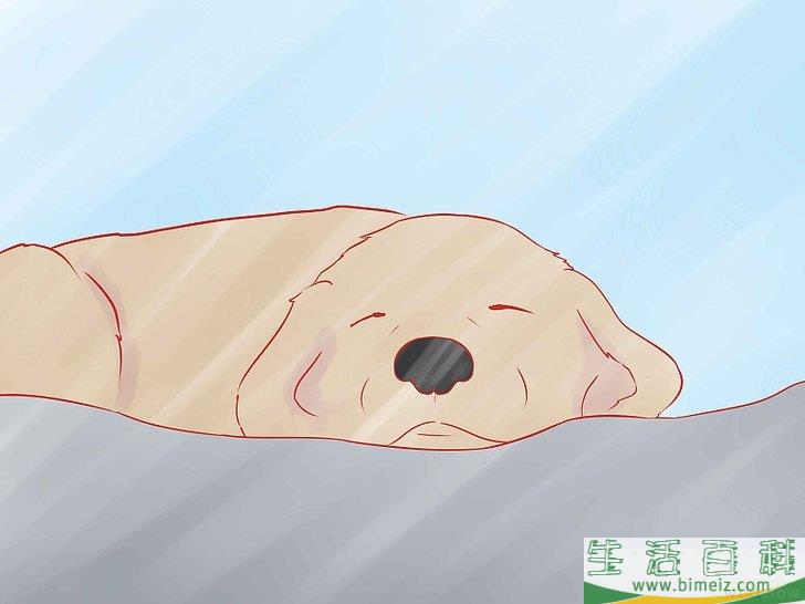 如何给狗修剪趾甲