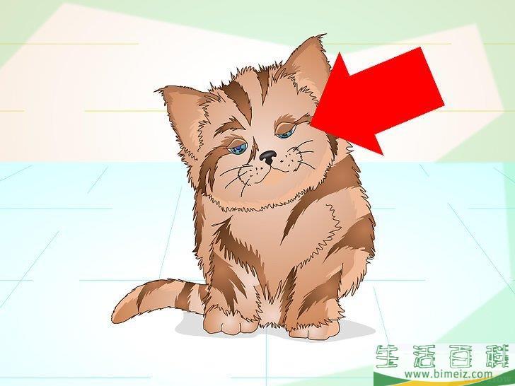 如何让生病的小猫吃东西