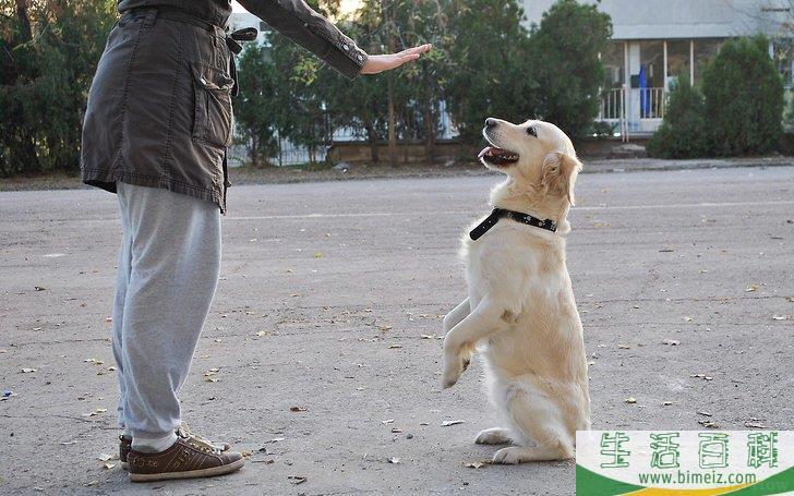 怎么成为训狗师